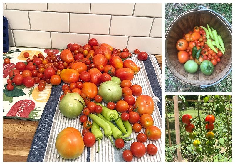 The Rab Farm // Summer Garden Harvest