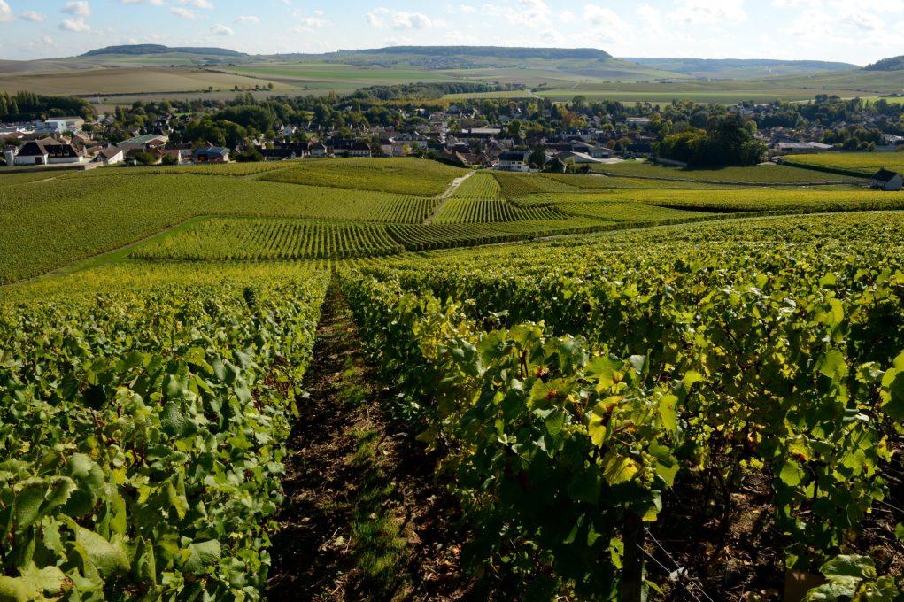 Une nouvelle communication sur le produit Champagne par le Syndicat général des vignerons.
