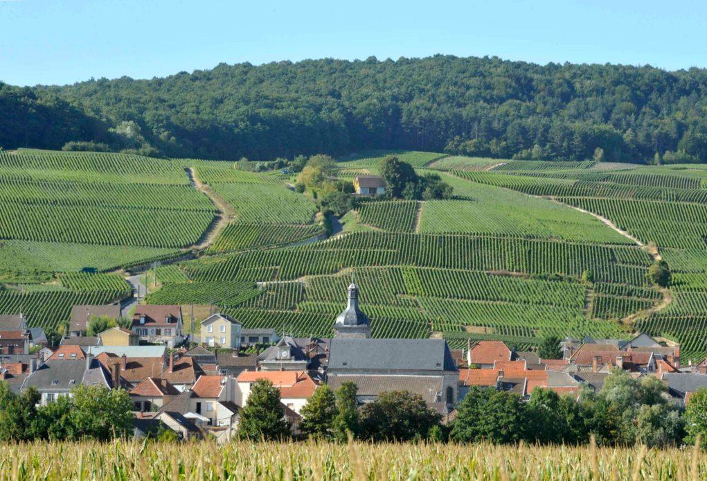 éunion de la Champagne pour l'assemblée générale de l'Association viticole champenoise.