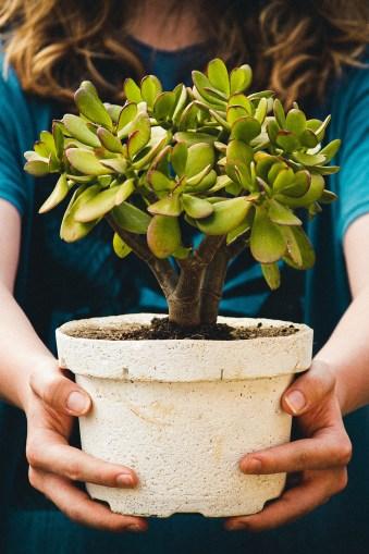 offrez une plante pour son anniversaire