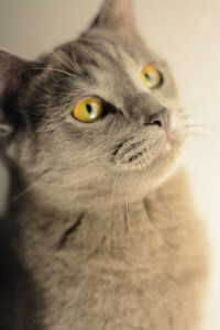 chat mignon intuition