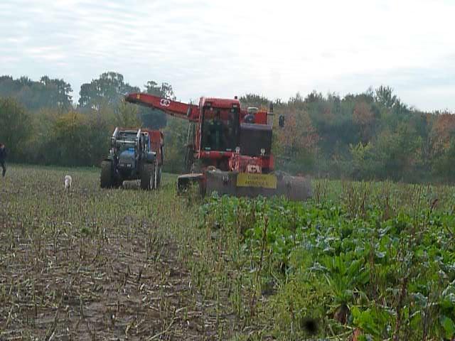 La récolte des betteraves