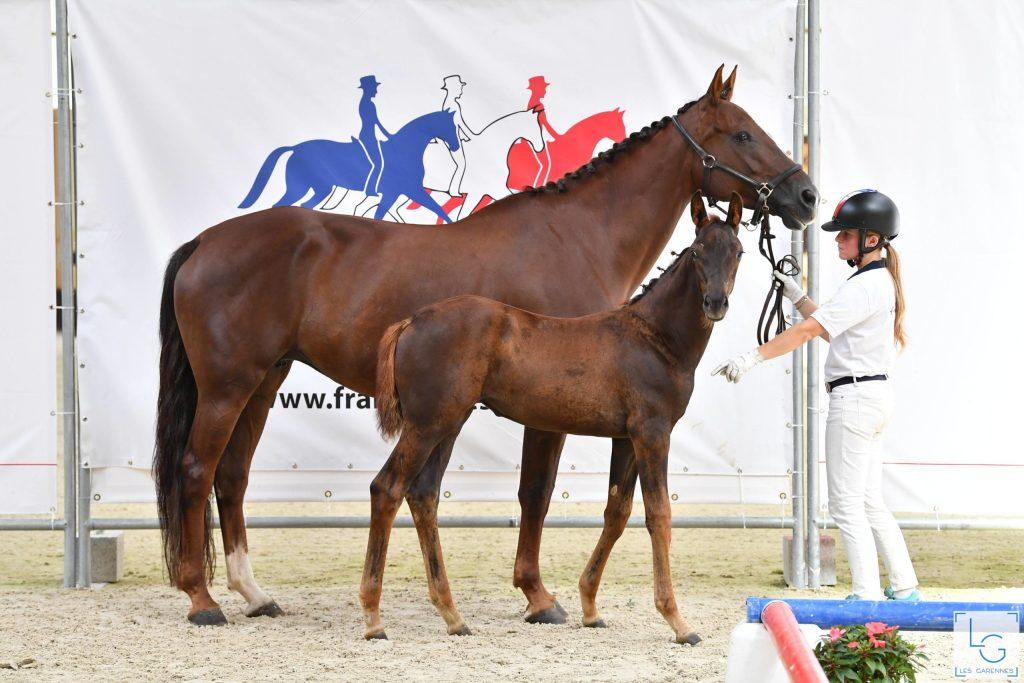 Keira et Ganesha championnat France Dressage des Foals