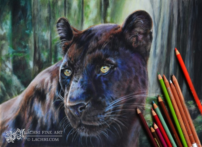 black leopard in colored pencil