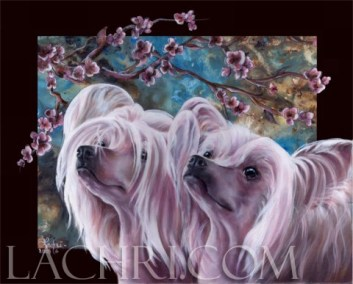 Chinese crested oil over acrylic painting