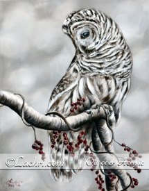 barred owl in oil over acrylic paint