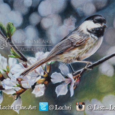 Chickadee in Luminance colored pencils