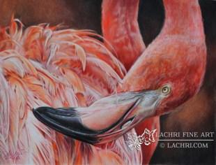 Flamingo in colored pencil