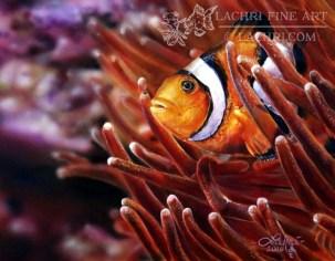 Clownfish Acrylic Painting