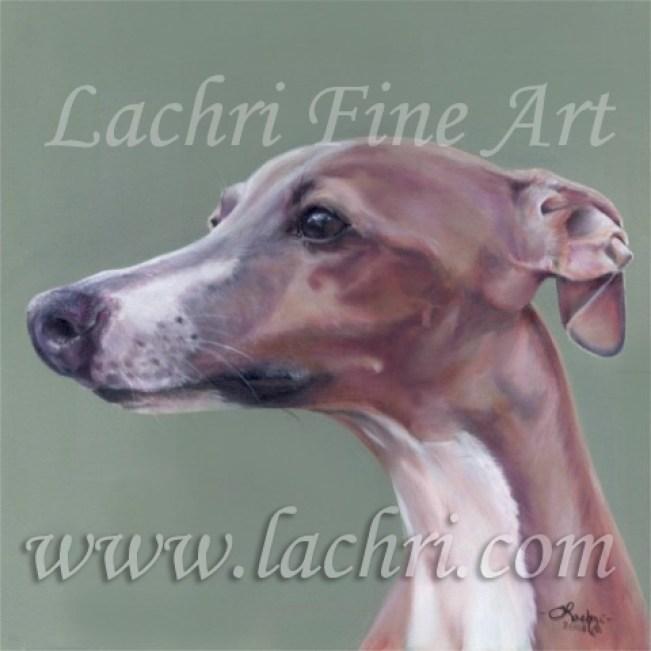 Italian Greyhound oil over acrylic painting