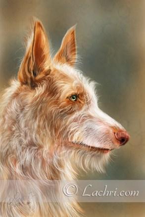 Ibizan Hound digital painting