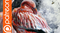 patreon-YT-thumb-flamingo-e