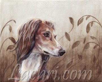 Saluki in colored pencil