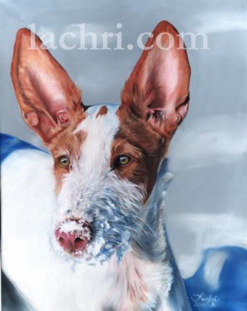 Oil over acrylic Ibizan Hound painting