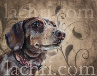 Dachshund in colored pencil