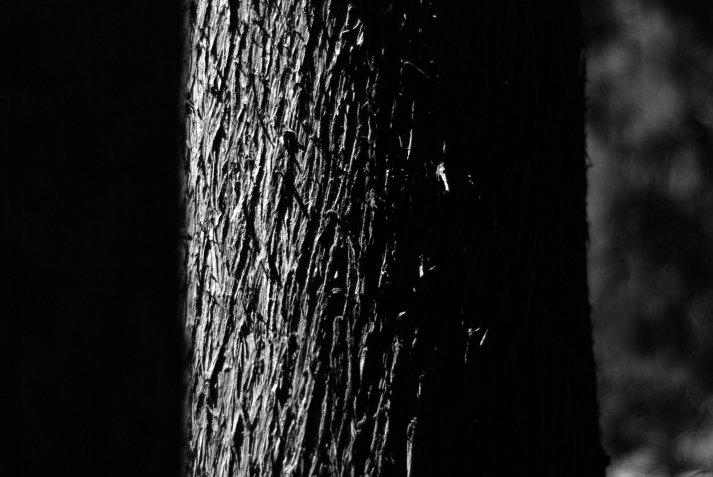 Eclipse de árbol y árbol eclipsado
