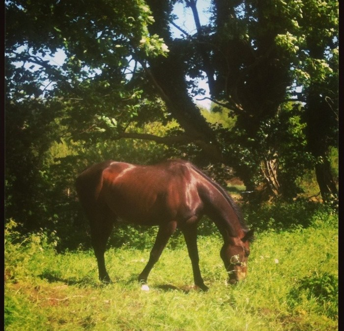 Horses and permaculture