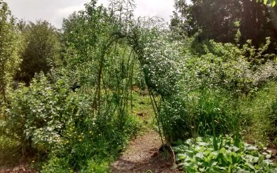 Developing the forest garden