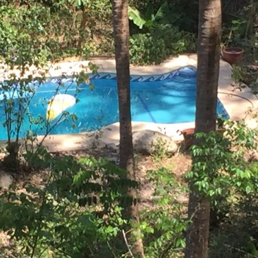 Jungle Swimming Pool