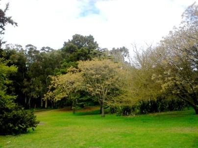 Necochea_Parque_Miguel_Lillo_Buenos_Aires_Argentina