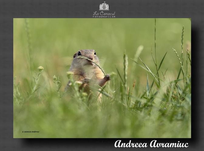 ANDREEA AVRAMIUC resize