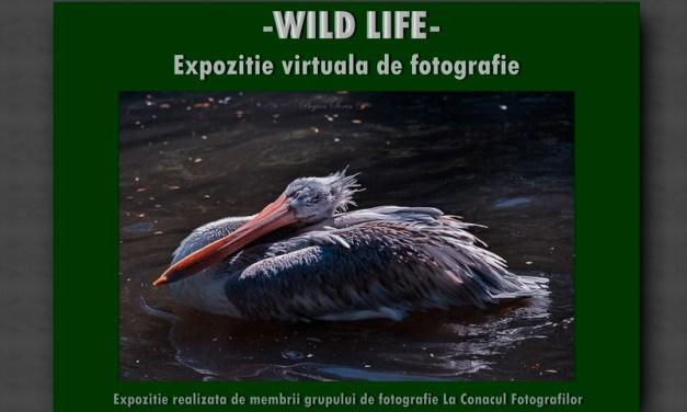 Wild Life – expozitie virtuala de fotografie