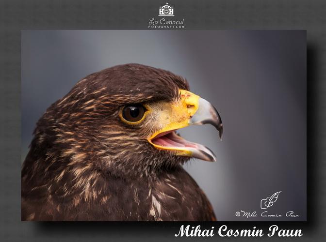 MIHAI COSMIN PAUN 1 resize