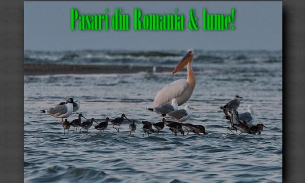 78 de pasari din Romania si din lume!