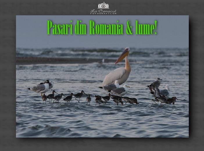 74 de pasari din Romania si din lume!