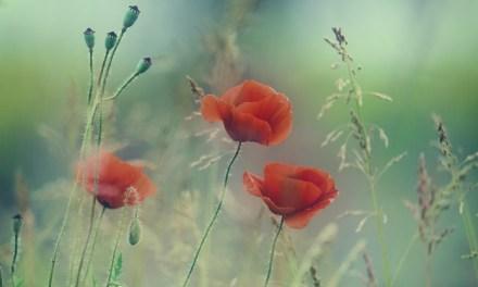 Minutul de poezie cu  Vanea Alexander Bell