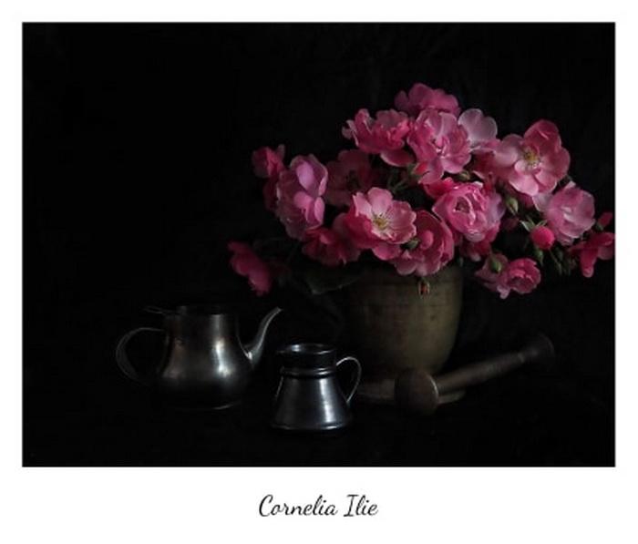 CORNELIA 5 resize