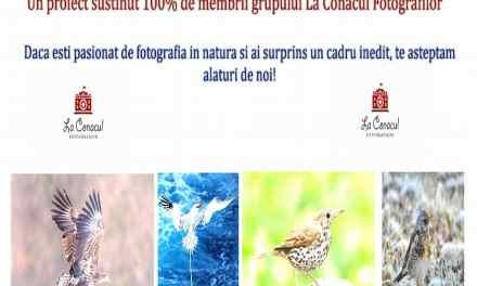200 Specii De Pasari  Surprinse Prin Fotografie!