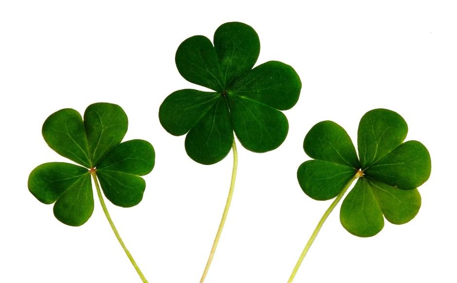 clover, green clover, 3-leaf clover, 4-leaf clover, Saint Patrick, St Patrick, St Patrick's Day