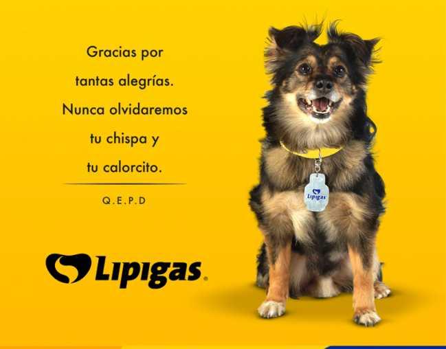 Revelan la causa de muerte del perro Spike: estaba en la tercera edad