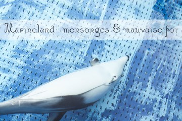 marineland mensonges et mauvaise foi dauphin
