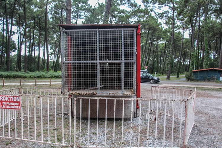 cirque camion cage fauve