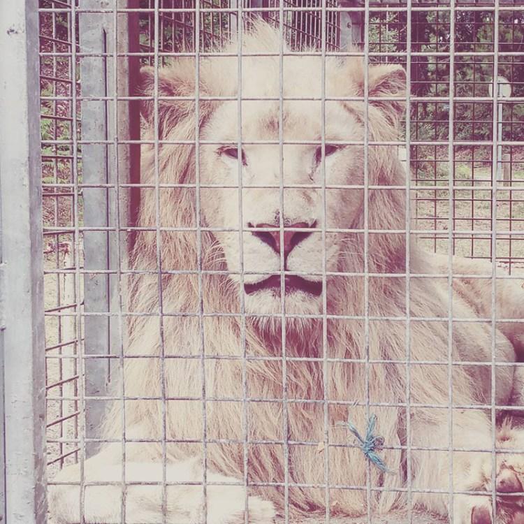 interdire les cirques avec animaux