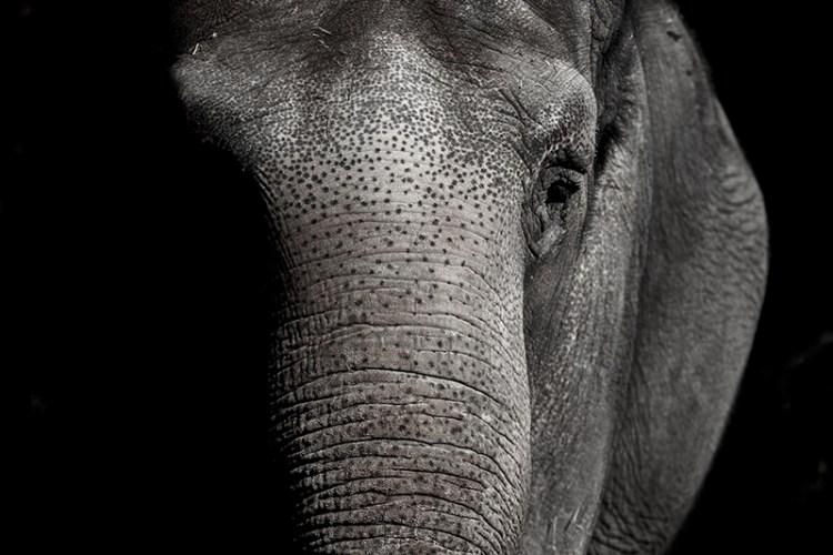 elephant tue accident cirque