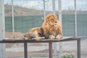 avis-taniere-zoo-refuge