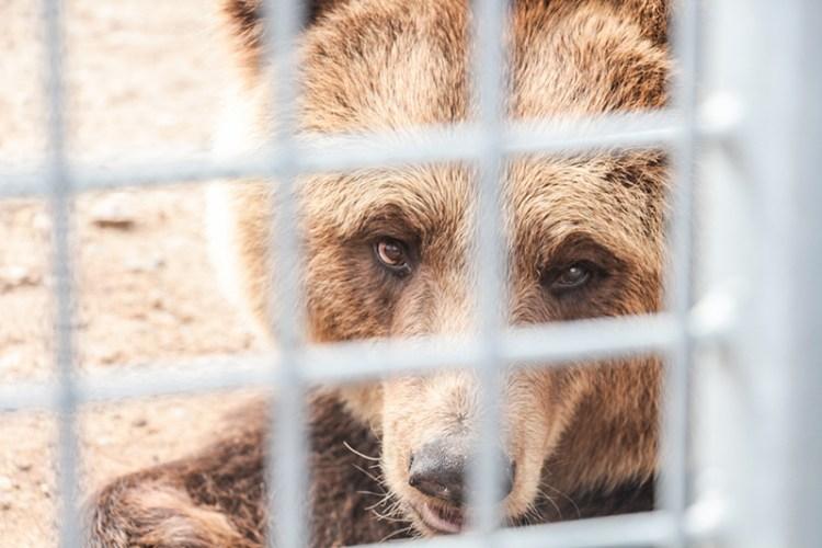 ours-taniere-zoo-refuge-avis