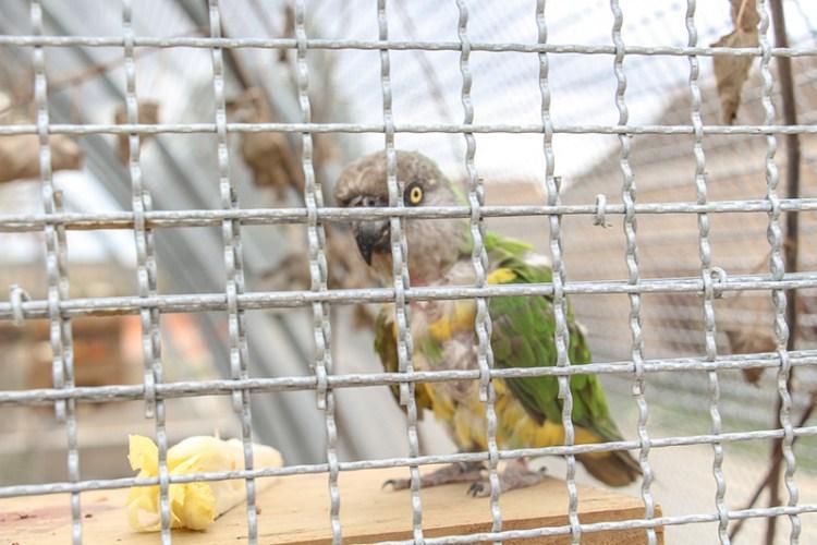 perroquet-taniere-zoo-soins