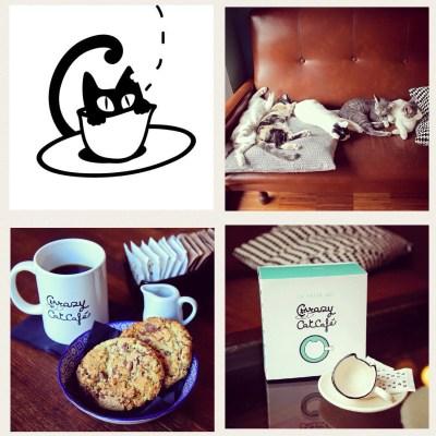 Le immagini di questo collage sono tratte dal sito e dalla pagina Facebook di Crazy Cat Cafè
