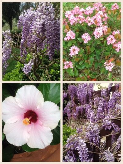 Giardino in Fiore
