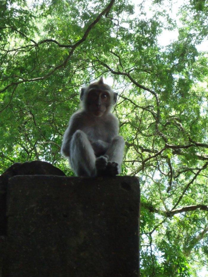 Bosque de monos