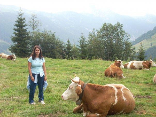 Vacas de Austria