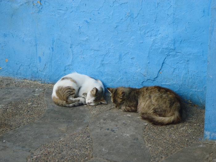 Gatitos en Assilah