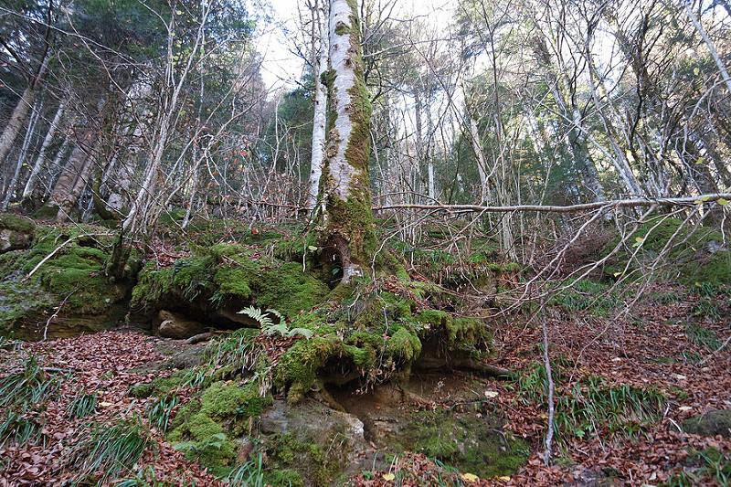 El bosque mágico de Navarra