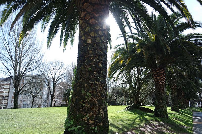 Parque, palmeras en A Coruña
