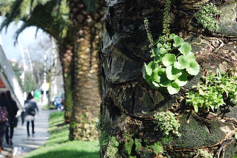 Parque,palmeras en A Coruña