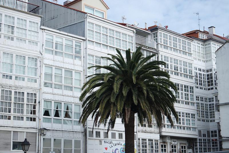 Paseo, palmeras en A Coruña